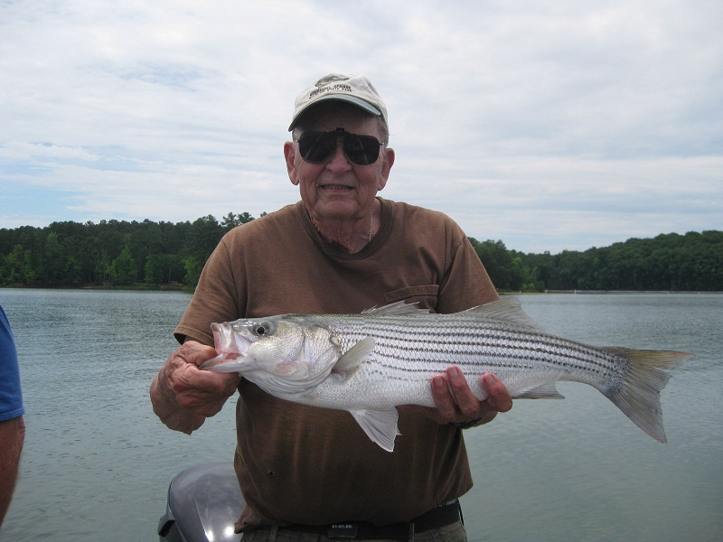 june lake hartwell striper fishing report up close