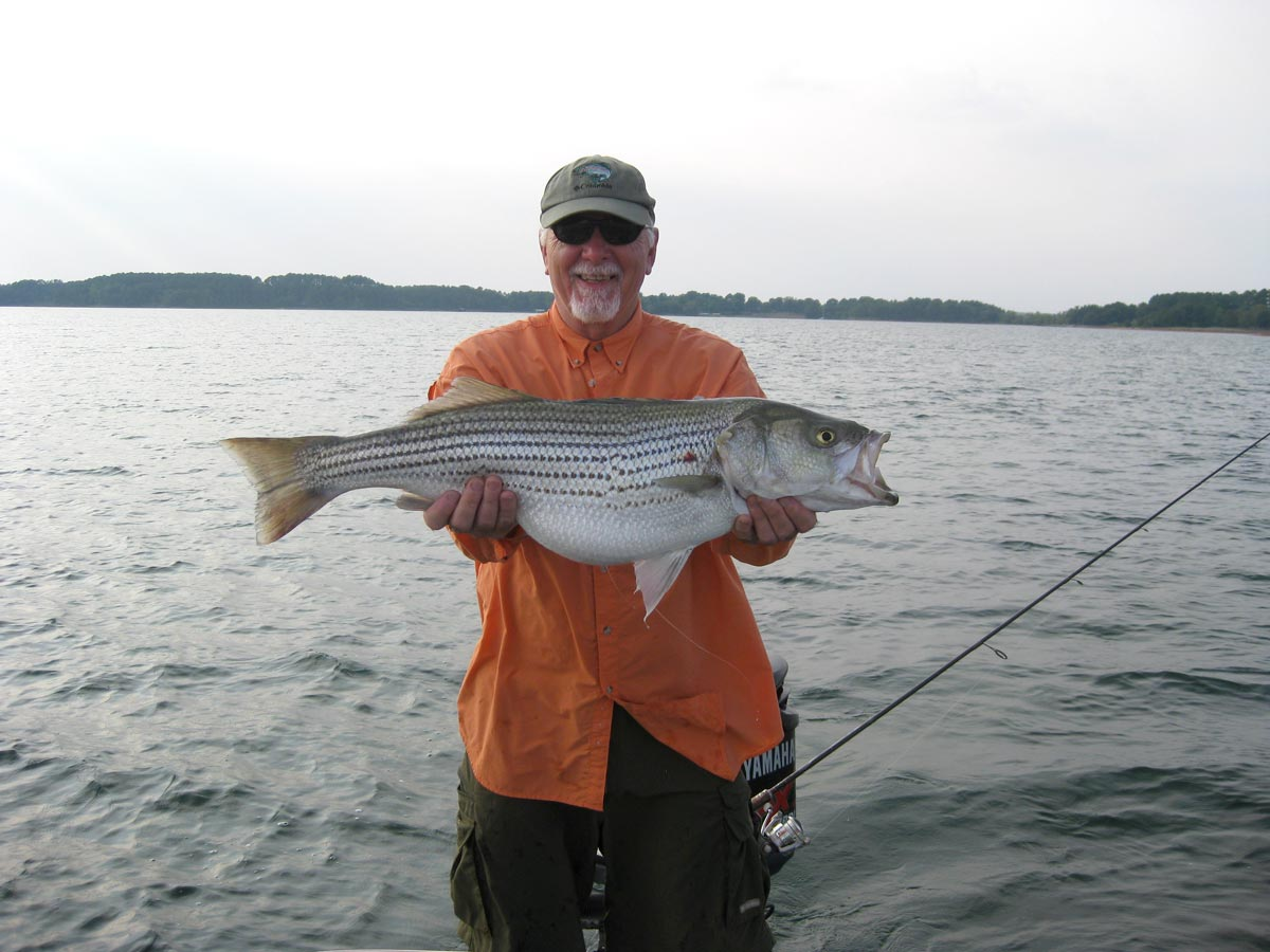 Lake hartwell fishing guides charters for striped bass for Fishing lake hartwell